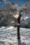 Κλείστε επάνω στα χιονώδη καλυμμένα nude δέντρα στα ιουλιανά όρη στο μπλε ουρανό στη χειμερινή εποχή Στοκ Φωτογραφίες