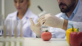 Κλείστε επάνω στον αρσενικό ερευνητή που εγχέει το χημικό υγρό στην ντομάτα φιλμ μικρού μήκους
