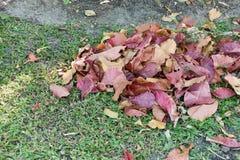 Κλείστε επάνω τα ζωηρόχρωμα ξηρά φύλλα σωρών στη χλόη στον κήπο στοκ εικόνες με δικαίωμα ελεύθερης χρήσης