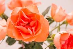 Κλείστε επάνω τα πορτοκαλιά τριαντάφυλλα Στοκ εικόνα με δικαίωμα ελεύθερης χρήσης