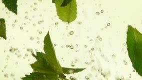 Κλείστε επάνω τα φρέσκα πράσινα φύλλα μεντών στο τσάι απόθεμα βίντεο