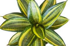 Κλείστε επάνω τα φύλλα πράσινων φυτών Στοκ εικόνες με δικαίωμα ελεύθερης χρήσης