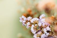Κλείστε επάνω τα όμορφα ξηρά λουλούδια στη φωτεινή θαμπάδα υποβάθρου Στοκ φωτογραφία με δικαίωμα ελεύθερης χρήσης