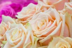 Κλείστε επάνω την άποψη μιας ανθοδέσμης τσάι-τριαντάφυλλα Στοκ Εικόνες