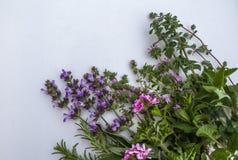Κλείστε επάνω την άποψη της δέσμης των φρέσκων χορταριών από τον κήπο Ï στοκ φωτογραφία