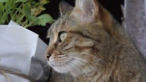 Κλείστε επάνω την άποψη της περίεργης γάτας φιλμ μικρού μήκους