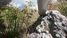 Κλείστε επάνω την άποψη της φωτεινής άσπρης, γκρίζας πέτρας στην πράσινη χλόη footage Έννοια της φύσης λεπτομερώς φιλμ μικρού μήκους