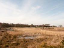 κλείστε επάνω την άποψη της χρυσής επιφύλαξης τοπίων φύσης καλάμων λιμνών Στοκ φωτογραφία με δικαίωμα ελεύθερης χρήσης