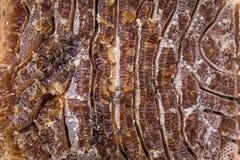 Κλείστε επάνω την άποψη του μελιού που γεμίζουν honeycells και των μελισσών εργασίας Στοκ εικόνες με δικαίωμα ελεύθερης χρήσης