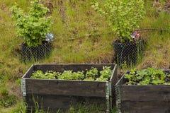 Κλείστε επάνω την άποψη του μικρού κήπου στα πλαστικά δοχεία και τα περιλαίμια παλετών Όμορφα υπόβαθρα φύσης στοκ εικόνες
