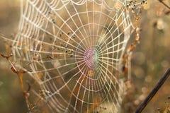 Κλείστε επάνω την άποψη των σειρών ενός Ιστού αραχνών Ιστός αραχνών με το γ Στοκ Φωτογραφίες