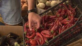 Κλείστε επάνω την άποψη των χεριών νεαρών άνδρων επιλέγοντας το καυτό πιπέρι στην αγορά φρούτων απόθεμα βίντεο