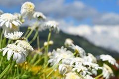 Κλείστε επάνω την άσπρη ομορφιά λουλουδιών και prety στοκ εικόνες με δικαίωμα ελεύθερης χρήσης