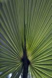 Κλείστε επάνω την εικόνα ενός αναδρομικά φωτισμένου πράσινου φύλλου φοινίκων στοκ φωτογραφίες