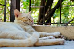 Κλείστε επάνω την εικόνα ενός ύπνου γατών στοκ φωτογραφίες