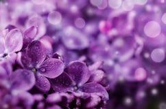 Κλείστε επάνω την εικόνα των φωτεινών ιωδών ιωδών λουλουδιών Αφηρημένο ρομαντικό floral υπόβαθρο στοκ εικόνες με δικαίωμα ελεύθερης χρήσης