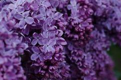 Κλείστε επάνω την εικόνα των φωτεινών ιωδών ιωδών λουλουδιών στοκ φωτογραφία με δικαίωμα ελεύθερης χρήσης