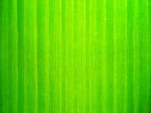 Κλείστε επάνω την πράσινη ταπετσαρία φύλλων στοκ εικόνα με δικαίωμα ελεύθερης χρήσης