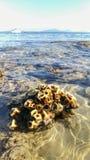 Κλείστε επάνω της θάλασσας Corel εδώ κοντά την παραλία κατά τη διάρκεια της χαμηλής παλίρροιας με το γιοτ και το φωτεινό υπόβαθρο στοκ φωτογραφία