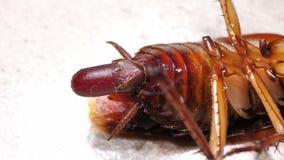 Κλείστε επάνω της κατσαρίδας φιλμ μικρού μήκους