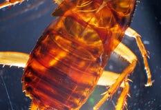 Κλείστε επάνω της κατσαρίδας στοκ φωτογραφία με δικαίωμα ελεύθερης χρήσης