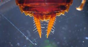 Κλείστε επάνω της κατσαρίδας στοκ εικόνα με δικαίωμα ελεύθερης χρήσης