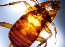 Κλείστε επάνω της κατσαρίδας στοκ φωτογραφίες με δικαίωμα ελεύθερης χρήσης