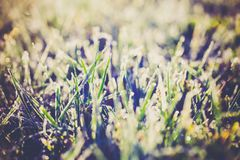 Κλείστε επάνω της πράσινης χλόης με τον παγετό, χειμερινό υπόβαθρο Στοκ εικόνα με δικαίωμα ελεύθερης χρήσης