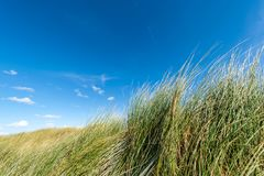 Κλείστε επάνω της χλόης στην αμμώδη παραλία στοκ φωτογραφίες