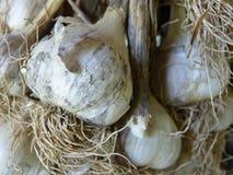 Κλείστε επάνω τη μακροεντολή των βολβών σκόρδου Στοκ εικόνες με δικαίωμα ελεύθερης χρήσης