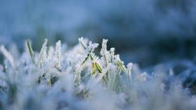 Κλείστε επάνω τη μακρο εικόνα των όμορφων κρυστάλλων πάγου στις λεπίδες της πράσινης χλόης το χειμώνα στοκ φωτογραφία