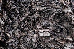 Κλείστε επάνω τη σύσταση και κτίστε τις φωλιές τερμιτών στον αποσυντιθειμένος κορμό του παλαιού μειωμένου δέντρου στοκ φωτογραφίες