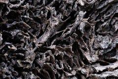 Κλείστε επάνω τη σύσταση και κτίστε τις φωλιές τερμιτών στον αποσυντιθειμένος κορμό του παλαιού μειωμένου δέντρου στοκ εικόνα