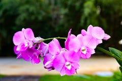 Κλείστε επάνω τη φωτογραφία του δέντρου με τη ρίζα αέρα ορχιδεών λουλουδιών στην επιφάνεια W στοκ εικόνες