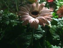 Κλείστε επάνω τη φωτογραφία του λουλουδιού Στοκ Φωτογραφία
