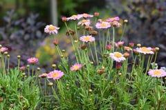 Κλείστε επάνω τη χλόη και το λουλούδι Στοκ Εικόνες