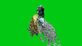 Κλείστε επάνω τον παφλασμό νερού στο μισό ανανά ενάντια στην πράσινη οθόνη ελεύθερη απεικόνιση δικαιώματος