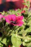 Κλείστε επάνω τους νέους νεαρούς βλαστούς λουλουδιών Στοκ φωτογραφίες με δικαίωμα ελεύθερης χρήσης