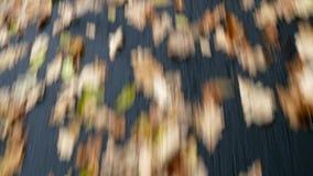 Κλείστε επάνω του δρόμου ασφάλτου με τα φύλλα φθινοπώρου, οδηγώντας περίληψη, οδηγός POV απόθεμα βίντεο