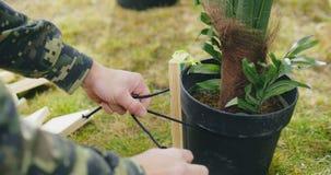 Κλείστε επάνω του κηπουρού που τείνει τον κήπο του απόθεμα βίντεο