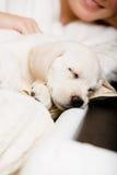 Κλείστε επάνω του κουταβιού ύπνου του Λαμπραντόρ σε ετοιμότητα του ιδιοκτήτη στοκ εικόνα