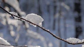 Κλείστε επάνω του λεπτού κλάδου δέντρων που καλύπτεται με το φρέσκο χιόνι απόθεμα βίντεο