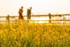 Κλείστε επάνω του λουλουδιού χλόης στο ηλιοβασίλεμα με τη θαμπάδα δύο ταξιδιωτών που περπατούν ενάντια κοντά στο φράκτη στοκ εικόνες