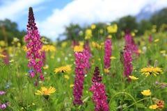 Κλείστε επάνω του ουρανού λουλουδιών agains στοκ φωτογραφία