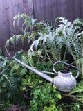 Κλείστε επάνω του παλαιού αγροτικού ξεπερασμένου ποτίσματος μπορεί στεμένος στο κρεβάτι κήπων στοκ φωτογραφία