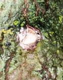 Κλείστε επάνω του πράσινου τραχιού φλοιού σύστασης λειχήνων βρύου στο δάσος δέντρων Στοκ Εικόνες