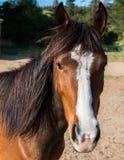 Κλείστε επάνω του προσώπου ενός καφετιού αλόγου στοκ φωτογραφίες με δικαίωμα ελεύθερης χρήσης