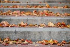 Κλείστε επάνω του τούβλου και του συγκεκριμένου πεζοδρομίου σκαλοπατιών πόλεων με τα φύλλα φθινοπώρου Στοκ φωτογραφία με δικαίωμα ελεύθερης χρήσης
