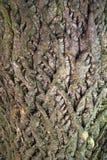 Κλείστε επάνω του φλοιού του α το δέντρο στοκ φωτογραφία