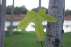 Κλείστε επάνω του φρέσκου φύλλου πράσινων φυτών στοκ φωτογραφίες